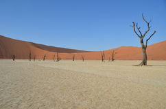 мертвое vlei Намибии Стоковая Фотография RF
