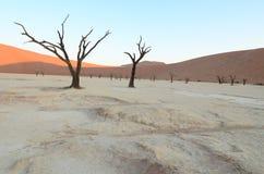 мертвое vlei Намибии Стоковые Изображения RF