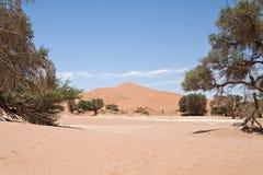 мертвое vlei Намибии Стоковые Изображения