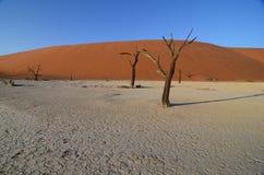 Мертвое Vlei, Намибия, Африка Стоковое Изображение