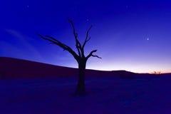 Мертвое Vlei, Намибия на сумраке Стоковая Фотография RF