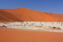 Мертвое vlei, Намибия Стоковая Фотография RF