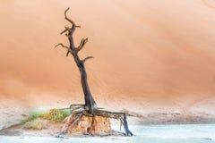 Мертвое Vlei около Sesriem в Намибии Стоковые Фотографии RF