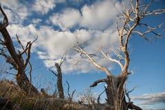 Мертвые ветви дерева против голубого неба Стоковое Изображение