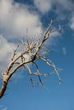 Мертвые ветви дерева против голубого неба Стоковые Изображения RF