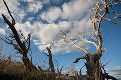 Мертвые ветви дерева против голубого неба Стоковые Фотографии RF