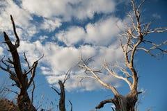 Мертвые ветви дерева против голубого неба Стоковая Фотография RF