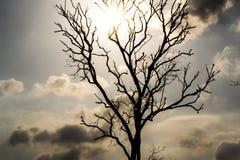 Мертвые ветви Стоковое Изображение RF