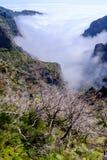 Мертвые деревья высокие в горах стоковые фотографии rf