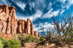 Мертвые деревья и кусты перед скалами и красный утес в национальном монументе Колорадо Стоковое фото RF