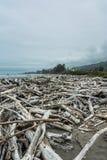 Мертвые деревья на пляже вдоль Орегона плавают вдоль побережья Стоковые Фотографии RF