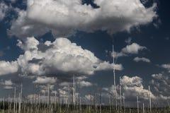 Мертвые деревья после лесного пожара Стоковое Фото