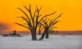 Мертвые деревья Camelthorn и красные дюны в Deadvlei, Sossusvlei, Nam стоковая фотография