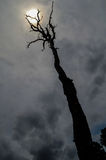 Мертвые дерево и солнце Стоковые Фотографии RF