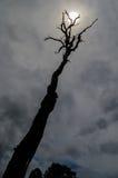Мертвые дерево и солнце Стоковое Изображение