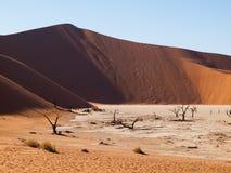Мертвые деревья акации и красные дюны пустыни Namib Стоковые Фотографии RF
