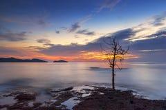 Мертвые деревья в море светлого сумерк Стоковое фото RF