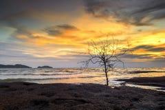 Мертвые деревья в море светлого сумерк Стоковые Изображения RF