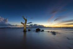 Мертвые деревья в море Стоковое Фото
