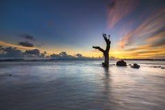 Мертвые деревья в море Стоковые Фотографии RF