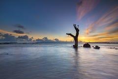 Мертвые деревья в море Стоковое Изображение RF