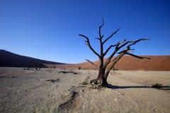 Мертвые деревья в сухом озере Sossusvlei, Намибии Стоковые Фотографии RF