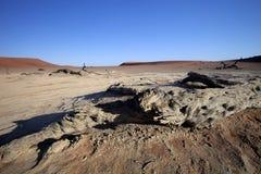 Мертвые деревья в сухом озере Sossusvlei, Намибии Стоковые Изображения RF