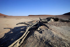 Мертвые деревья в сухом озере Sossusvlei, Намибии Стоковое Фото