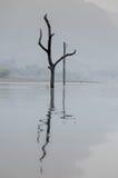 Мертвые деревья в тумане утра в озере в запруде и отражении, Th Стоковое Изображение