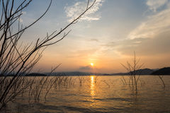Мертвые деревья и заход солнца Стоковое Изображение