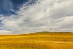 Мертвые деревья и поля с небом облаков белизны голубым Стоковая Фотография
