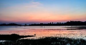 Мертвые деревья на озере Стоковые Фото