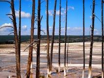 Мертвые деревья стоя в горячих источниках в пределах Йеллоустона национального p Стоковые Фото