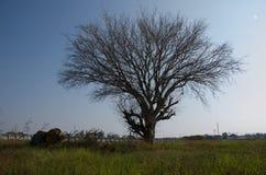 Мертвые деревья сушат стены лужайки обширные И авария смесителя цемента установленная как Стоковые Фотографии RF