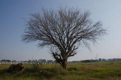 Мертвые деревья сушат стены лужайки обширные И авария смесителя цемента установленная как Стоковое Изображение RF