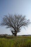 Мертвые деревья сушат стены лужайки обширные И авария смесителя цемента установленная как Стоковая Фотография