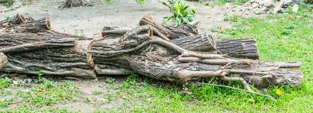 Мертвые деревья Стоковые Изображения