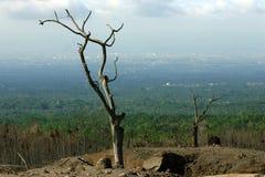 Мертвые деревья стоковые фото