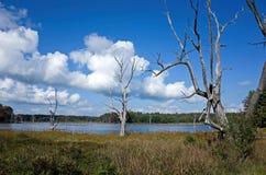 Мертвые деревья Стоковые Изображения RF