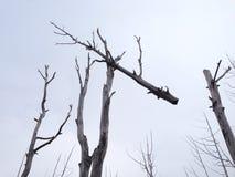 Мертвые деревья Стоковое Изображение