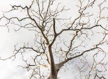 Мертвые деревья Стоковое Фото