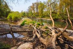 Мертвые деревья Стоковая Фотография RF