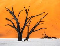 Мертвые деревья Camelthorn и красные дюны, Deadvlei, Sossusvlei, Намибия Стоковое Изображение