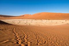 Мертвые деревья Camelthorn и красные дюны, Deadvlei, Sossusvlei, Намибия Стоковое фото RF