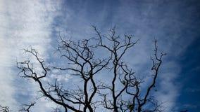 Мертвые завтрак-обеды дерева против голубого неба Стоковая Фотография