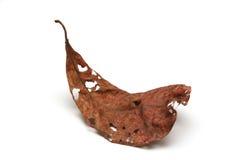 Мертвые листья на белой предпосылке Стоковая Фотография RF