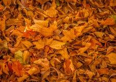 Мертвые листья осенью Стоковое Изображение