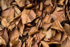 Мертвые листья сняли идеал для текстур предпосылок Стоковые Изображения