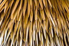 Мертвые листья сняли идеал Стоковые Фотографии RF