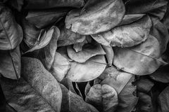 Мертвые листья для предпосылок и текстур, черно-белого тона Стоковое Изображение RF